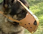 The German Dog Muzzle