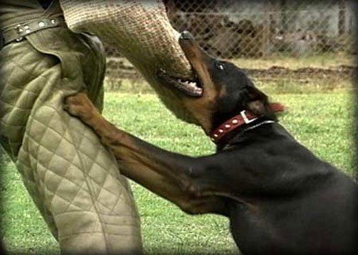 Dog Training Toowoomba